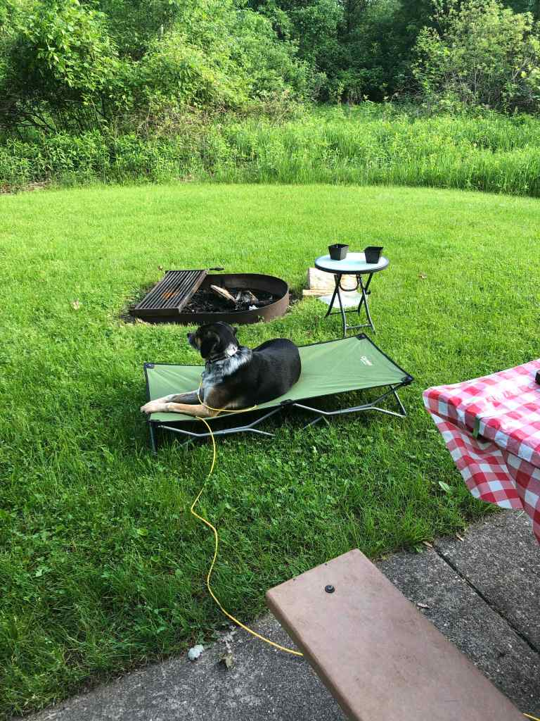 Dog on cot by campfire