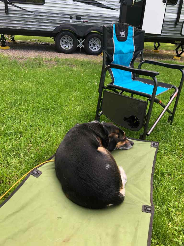 Dog laying on cot designed for dogs